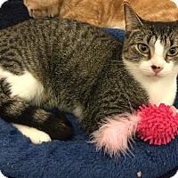 Adopt A Pet :: Josephine - Sarasota, FL