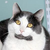 Adopt A Pet :: Rocky - Harrison, NY