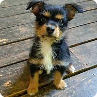 Adopt A Pet :: Wiggley - Lawrenceville, GA