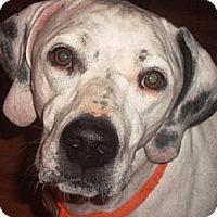 Adopt A Pet :: Binky - Irvington, KY