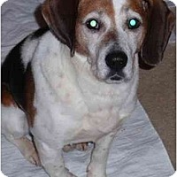 Adopt A Pet :: Samuel - Indianapolis, IN