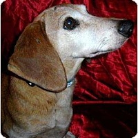 Adopt A Pet :: Henry - Vale, OR