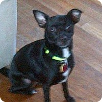 Adopt A Pet :: Gator - South Amboy, NJ