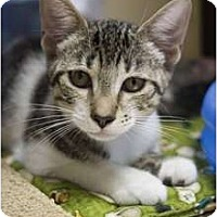 Adopt A Pet :: Whitney - New Port Richey, FL