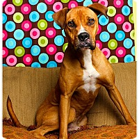 Adopt A Pet :: Kayo - Baton Rouge, LA