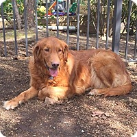 Adopt A Pet :: Wendy - New Canaan, CT