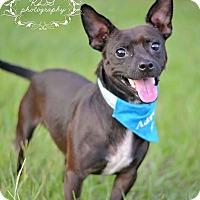 Adopt A Pet :: Peanut - Fort Valley, GA