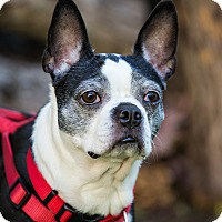 Adopt A Pet :: Bella Lyons - Greensboro, NC