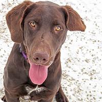 Adopt A Pet :: Farley - Meridian, ID