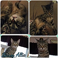 Adopt A Pet :: Sassy Allie - Central Islip, NY