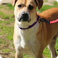 Adopt A Pet :: Spice - Chester Springs, PA