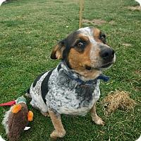 Adopt A Pet :: Rosco - Moberly, MO