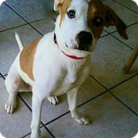 Adopt A Pet :: Destiny - Tampa, FL