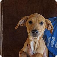 Adopt A Pet :: Cabi - Oviedo, FL