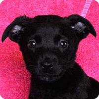 Adopt A Pet :: **LEONARA** MEET APRIL 29TH! - Mukwonago, WI