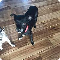 Adopt A Pet :: CoCo - Ashville, OH