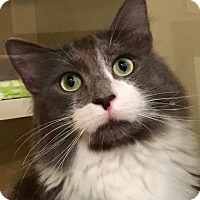 Adopt A Pet :: Kota - Green Bay, WI