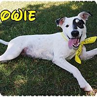 Adopt A Pet :: Bowie - Converse, TX