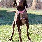 Adopt A Pet :: Mandy