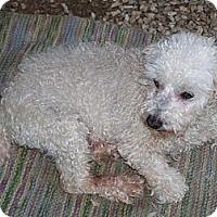 Adopt A Pet :: Sammie OUR LITTLE MAN - Antioch, IL