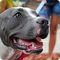 Adopt A Pet :: Colby - Orlando, FL