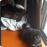 Adopt A Pet :: Kodiak - Vancouver, BC