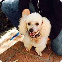 Adopt A Pet :: Pierre URGENT @ shelter - Los Angeles, CA