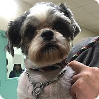 Adopt A Pet :: Lulu - Rockaway, NJ