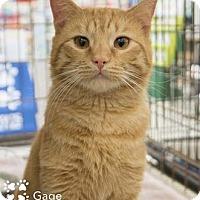 Adopt A Pet :: Gage - Merrifield, VA