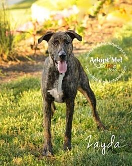 Pit Bull Terrier Mix Dog for adoption in Topeka, Kansas - Zayda