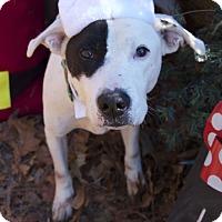 Adopt A Pet :: Petey - Bishopville, SC