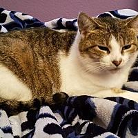Adopt A Pet :: Lizzie - Toledo, OH