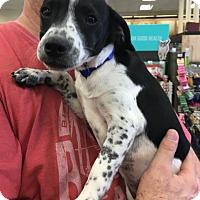 Adopt A Pet :: Toby - Cat Spring, TX
