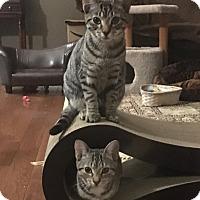 Adopt A Pet :: Zack - Horsham, PA