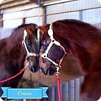 Adopt A Pet :: Oman - Elverta, CA