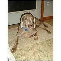 Adopt A Pet :: Lacey - Attica, NY