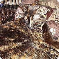 Adopt A Pet :: Emma - Brooklyn, NY