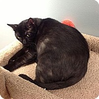 Adopt A Pet :: Binx - Lake Charles, LA