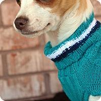 Adopt A Pet :: Slick - Bridgeton, MO
