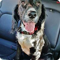 Adopt A Pet :: Lucky - Brooklyn, NY