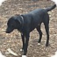 Adopt A Pet :: ROBBINS - MILWAUKEE, WI