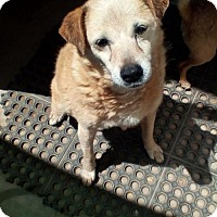 Adopt A Pet :: Riley- in a foster home - Apple Valley, CA