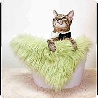 Adopt A Pet :: Luke - Richardson, TX