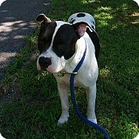 Adopt A Pet :: BUBBA - Glastonbury, CT