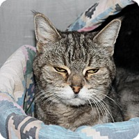 Adopt A Pet :: Granny - Casa Grande, AZ
