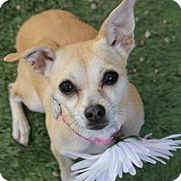 Adopt A Pet :: Weezie - Phoenix, AZ