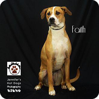 Labrador Retriever/Border Collie Mix Dog for adoption in Houston, Texas - Faith