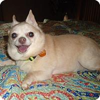 Adopt A Pet :: Roxy - Salem, OR