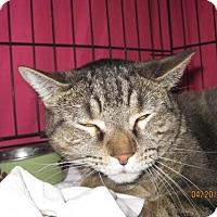 Adopt A Pet :: Cade - Glendale, AZ