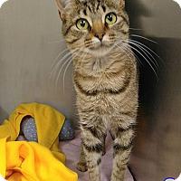 Adopt A Pet :: Petco 1 - Triadelphia, WV